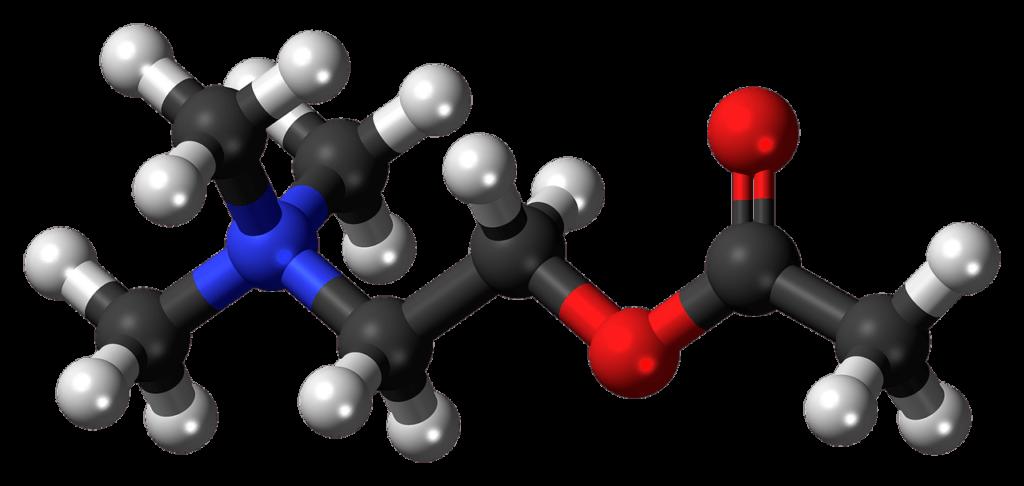 acetylcholine