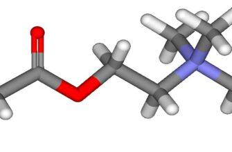 Ацетилхолин действие